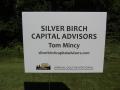 Silver Birch straight-on